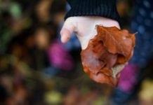 őszi falevelek tenyérben