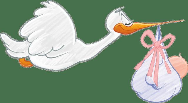 Terhesség és munkajog