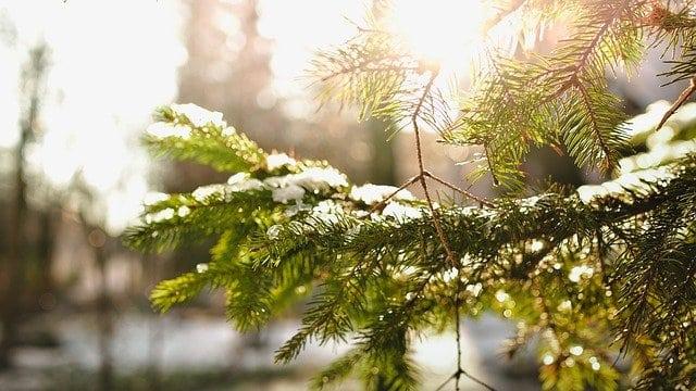 fenyőfa, karácsonyi vers