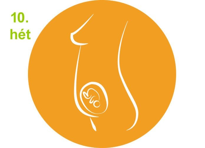 terhességi hetek - 10.hét