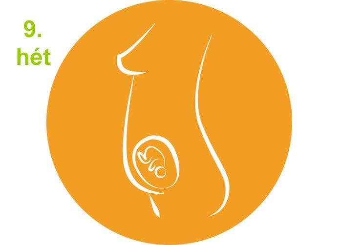 terhességi hetek - 9.hét