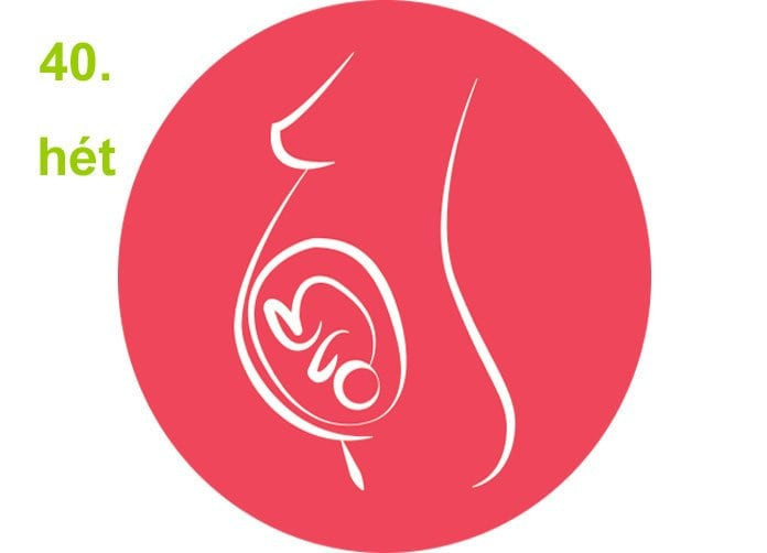 terhességi hetek - 40.hét