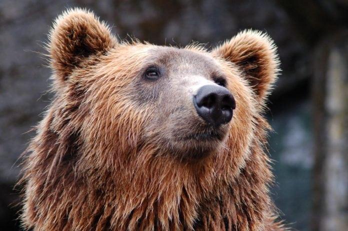 Veresegyházi Medvepark