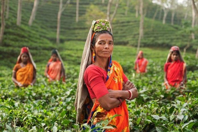 India ízei: védikus fűszerek