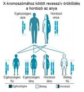 hemofília-öröklődése-274x300.jpg