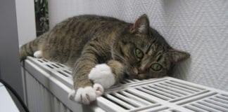 macska fekszik a radiátoron