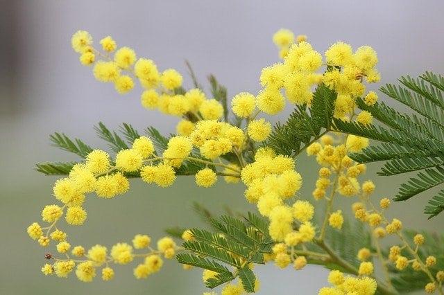 tavaszi allergia