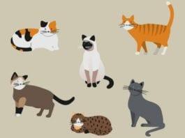 Rendkívüli macska örökbefogadó nap a Rex Állatszigeten