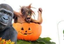 Állatkerti halloween az őszi szünetben