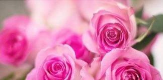 rózsa, rózsaünnep, állatkert