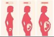 terhesség, trimeszterek